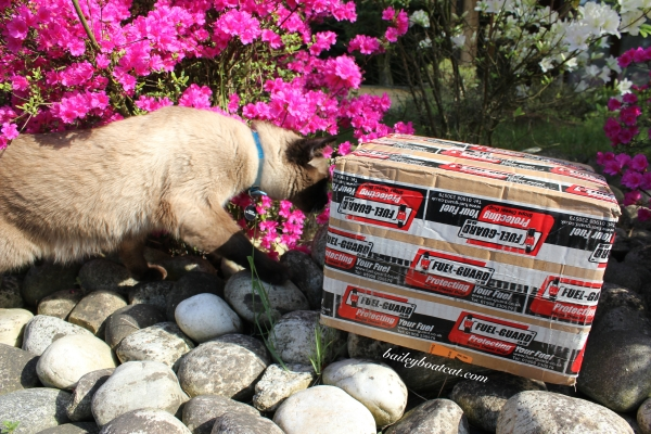 Sniffing the Fuel Guard box