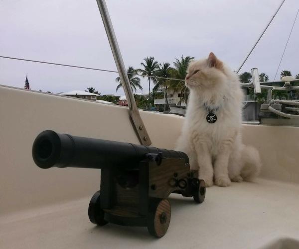 Capt. Sunny