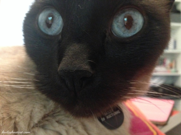 Startled Selfie