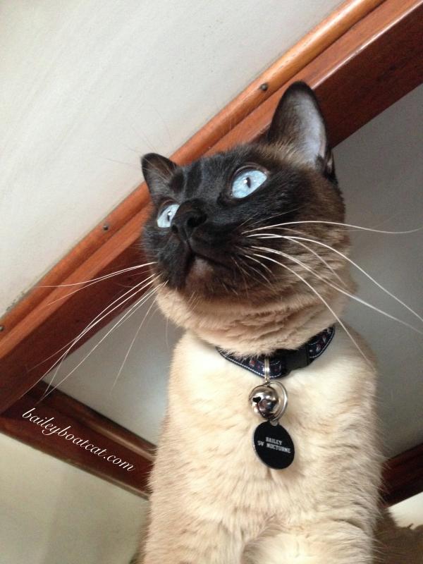 Wistful Whiskers Selfie