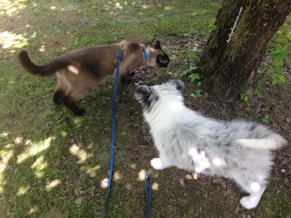 Sniffing in the garden