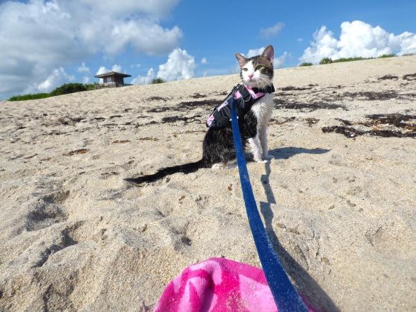 Purrseidon at the beach