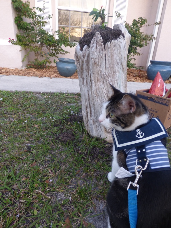 Purrseidon Sailor outfit