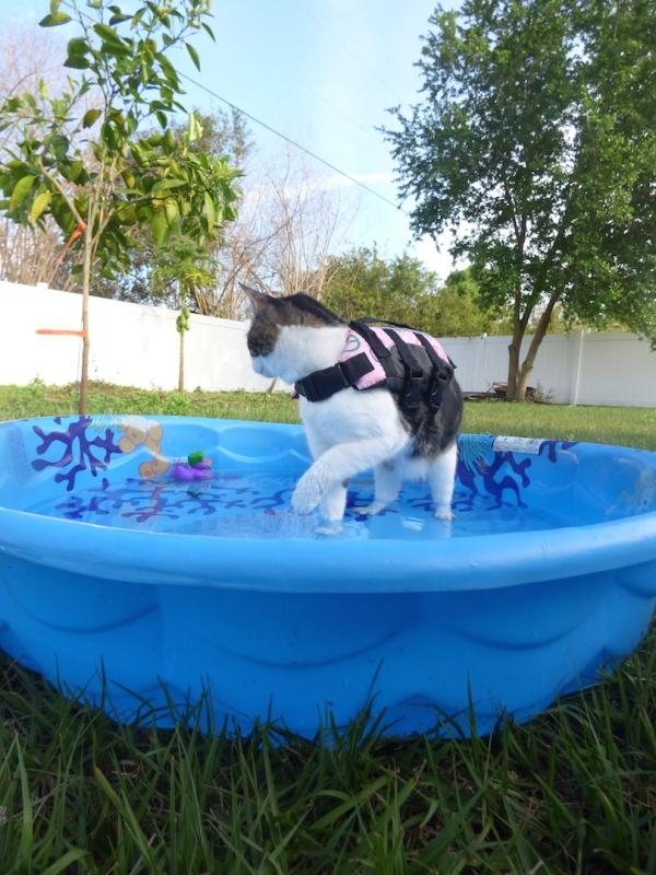 Purrseidon Pool