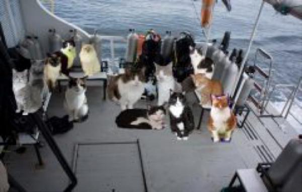 Cats aboard.jpg