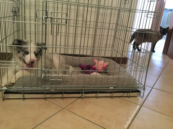 april-in-her-first-crate