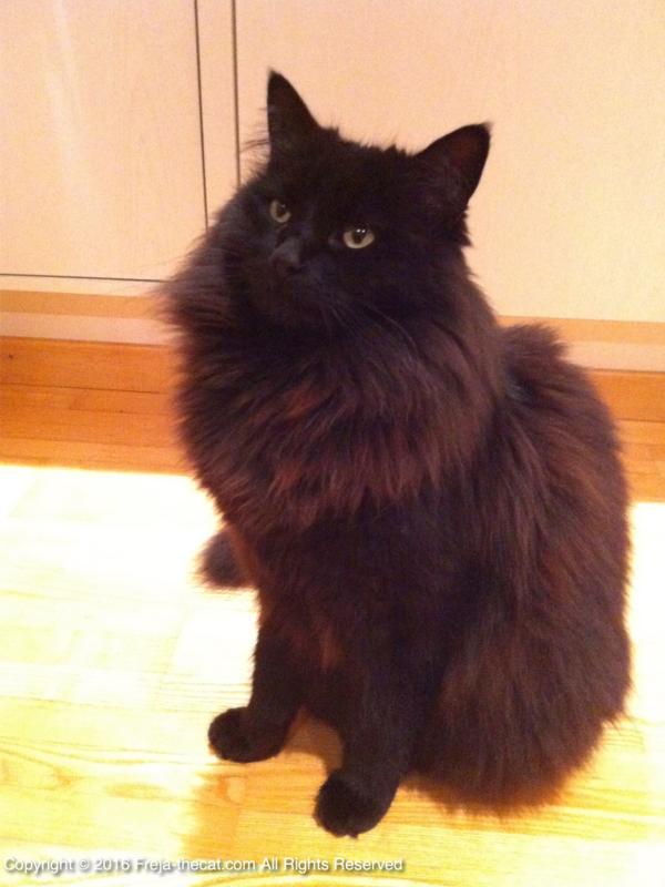 Fluffy Odin