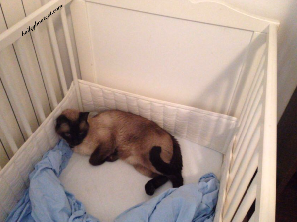 Bailey in the cot