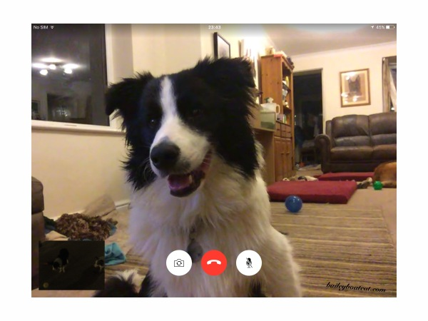 FaceTime with Digger