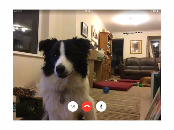 Digger on FaceTime