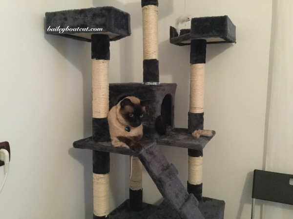 Chilling in the cat tree