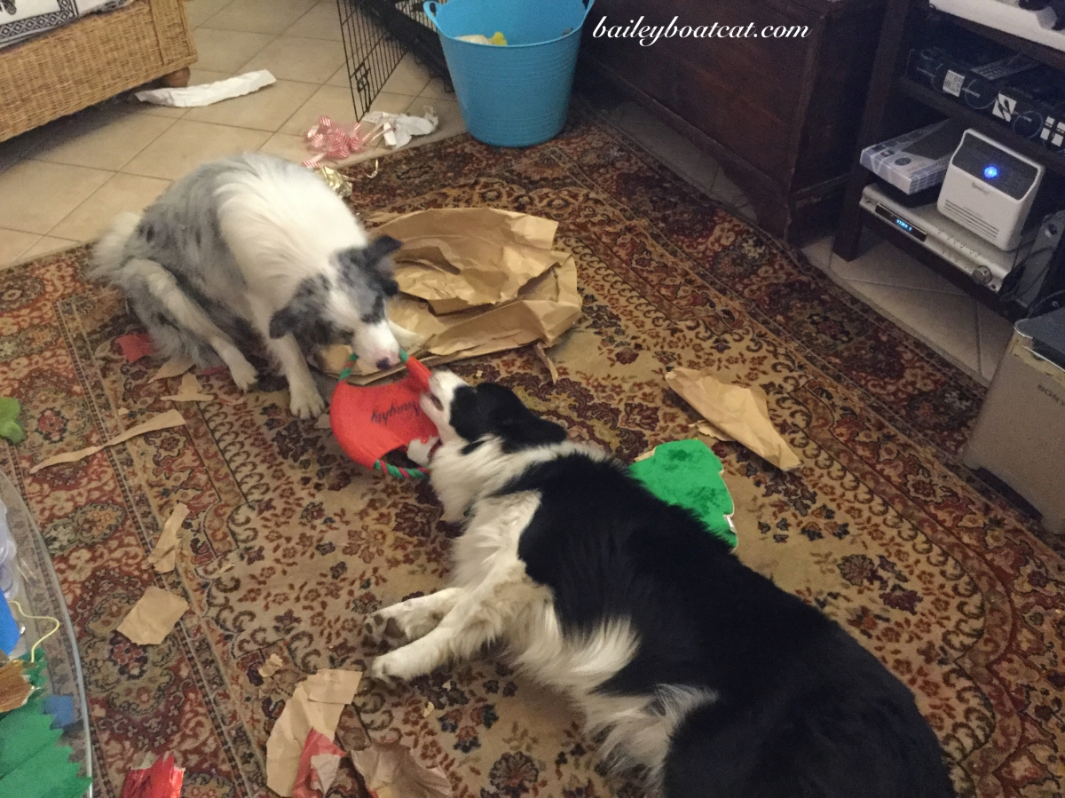The puppies have already broken their Christmas presents!