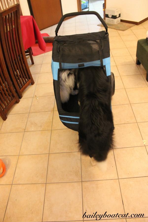 the-new-stroller