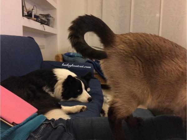 Sharing a sofa