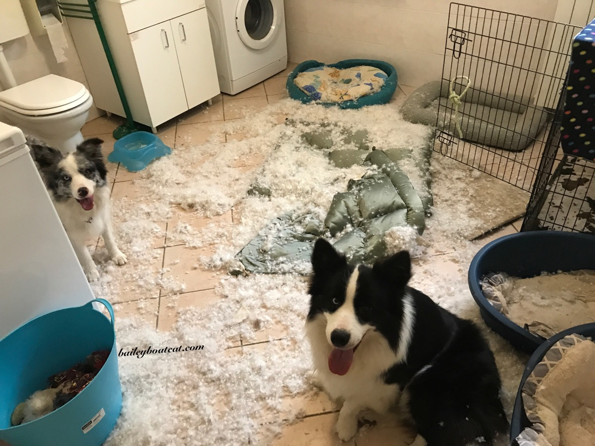Shocked! We had an explosion... well that's what the dogs say!