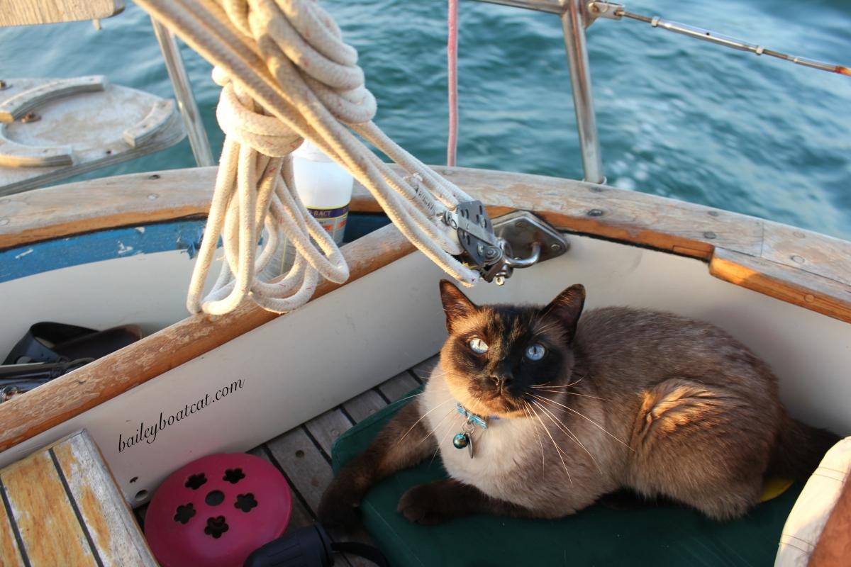 Sailing selfie!